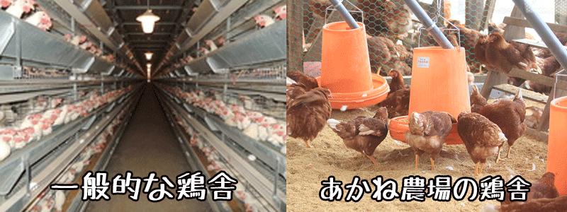 鶏舎の比較
